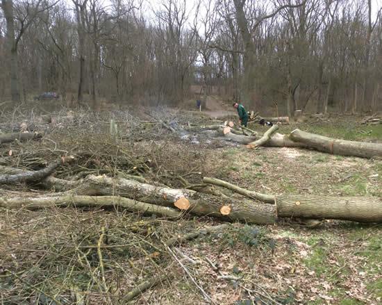 felled-tree-ride