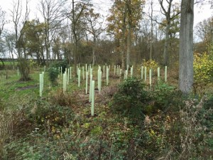trees in tubes in woodland