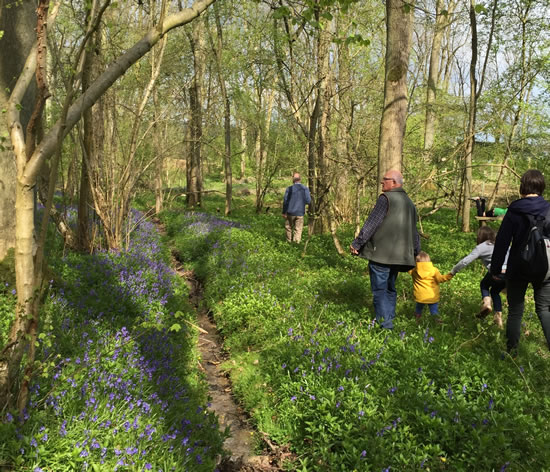 Bluebell visits in East Northants woodland