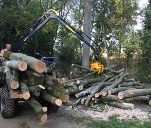 crane lifting logs