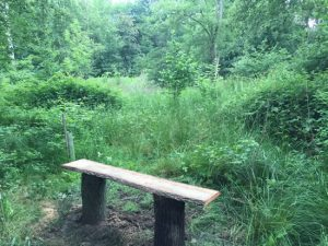 bench in woodland